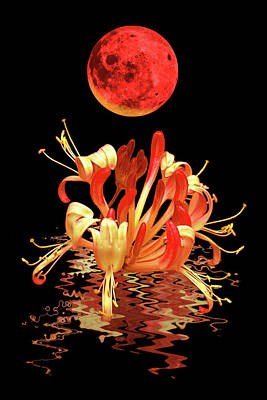 Photograph - In The Heat Of The Night 2 Honeysuckle Red Moon by Gill Billington