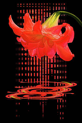 Photograph - In The Heat Of The Night 3 - Red Amaryllis by Gill Billington