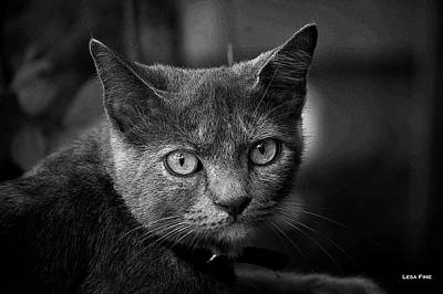 Photograph - In The Know Pet Art Bw by Lesa Fine