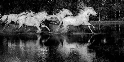 Troupeau Photograph - In The Marshes by Alain Gaymard