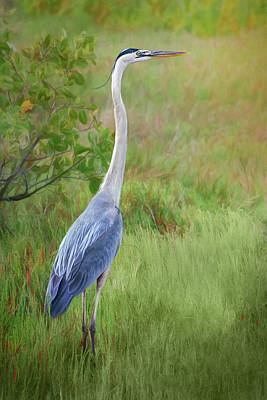 Photograph - In The Meadow - Great Blue Heron by Nikolyn McDonald