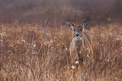Print featuring the photograph In The Meadow by Robin-Lee Vieira
