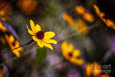 Photograph - In The Meadow With Friends by Michael Arend