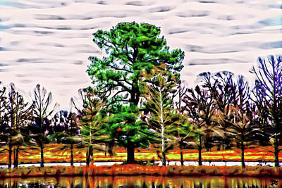 Photograph - In The Middle Of A Pond Stands A Cedar Tree by Gina O'Brien