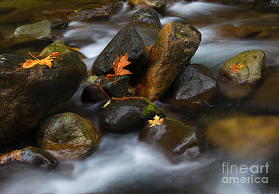 Skate Creek Photograph - In The Midst Of It All by Mike Dawson