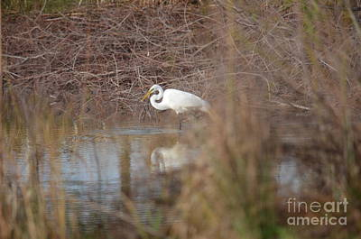Photograph - In The Midst Of The Wetlands by Maria Urso