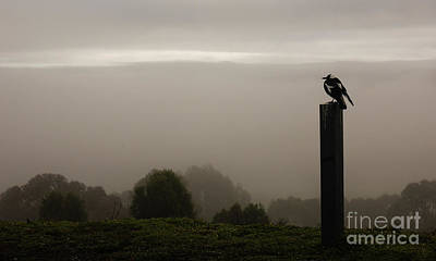 Photograph - In The Mist by Lexa Harpell