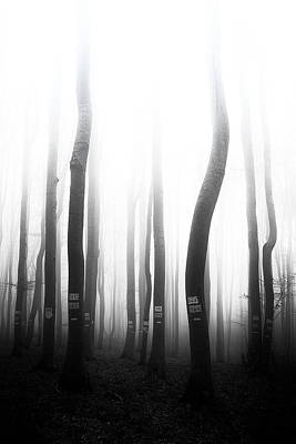 Photograph - In The Misty Forest by Plamen Petkov
