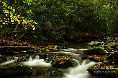 Photograph - In The Mountains Of Virginia by Darren Fisher