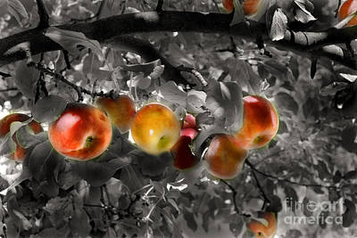 Digital Art - In The Orchard Of The Artists by William Fields