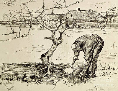 Drawing - In The Orchard  by Vincent Van Gogh