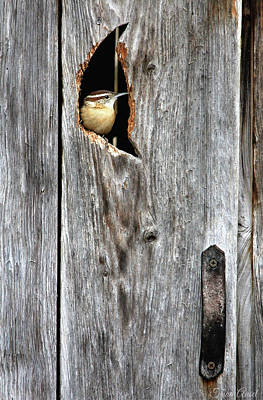 In The Outhouse Shed Art Print