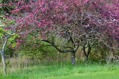 Photograph - In The Park by Ann Bridges