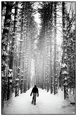 Photograph - In The Pine Cathedral by John Meader