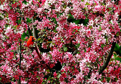 Photograph - In The Pink by Debbie Oppermann