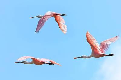 In The Pink Original