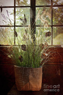 Photograph - In The Potting Shed by Alex Rowbotham