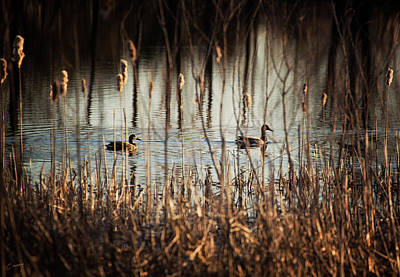 Christina Conway Royalty-Free and Rights-Managed Images - In the Reeds by Christina Conway