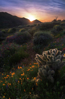 Cactus Photograph - In The Saddle by Philip Shultz