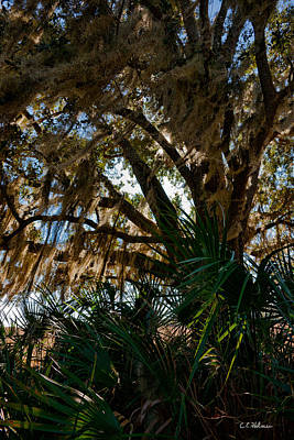 Photograph - In The Shade Of A Florida Oak by Christopher Holmes