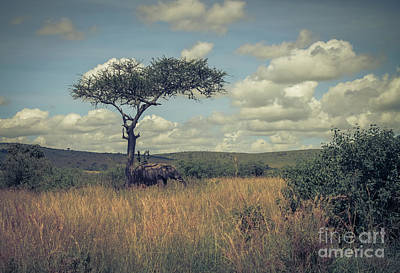 Photograph - In The Shade Of Acacia Tree by Claudia M Photography