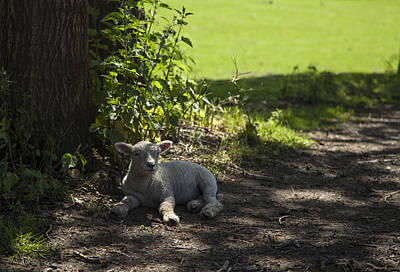 Photograph - In The Shade by Stewart Scott