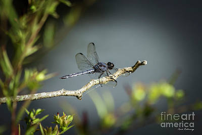 Photograph - In The Shadows Dragonfly 777 Art by Reid Callaway
