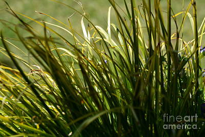 Photograph - In The Shadows Of The Wind by Maria Urso