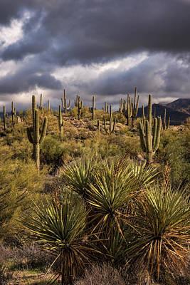 Photograph - In The Sonoran Desert  by Saija Lehtonen