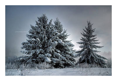 Heather Rivet Photograph - In The Spirit Of Winter by Heather  Rivet