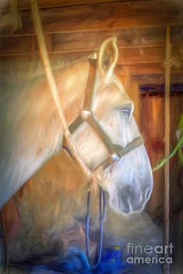 Photograph - In The Stable by Marion Johnson