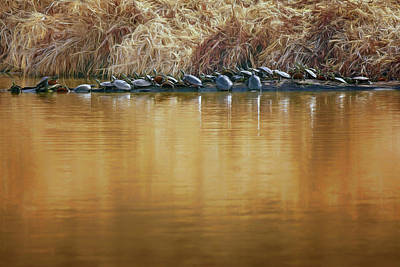 Painted Turtle Wall Art - Photograph - In The Sun - Turtles by Nikolyn McDonald