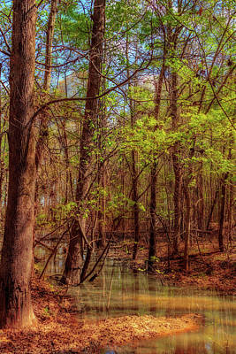 In The Swamp Art Print by Barry Jones