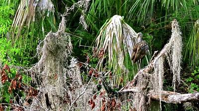 Photograph - In The Swamp by Carol Bradley