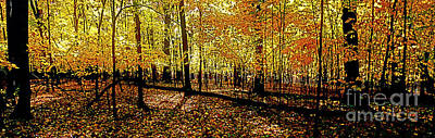 Photograph - In The The Woods, Fall  by Tom Jelen