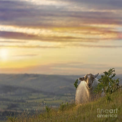 Mammals Royalty-Free and Rights-Managed Images - In the warm evening sunlight  by Angel Ciesniarska