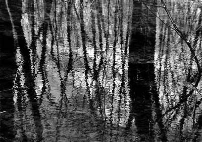 Photograph - In The Wetland 2 Bw by Mary Bedy