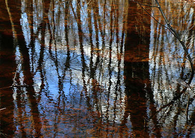 Photograph - In The Wetland 2 by Mary Bedy