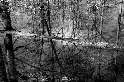 Photograph - In The Wetland 3 Bw by Mary Bedy