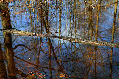 Photograph - In The Wetland 3 by Mary Bedy