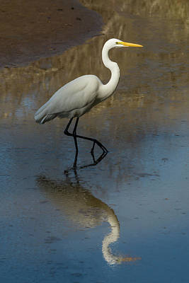 Bird Photograph - In The Wetland by Bruce Frye