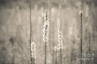 In The Wild Grass Art Print by Ana V Ramirez