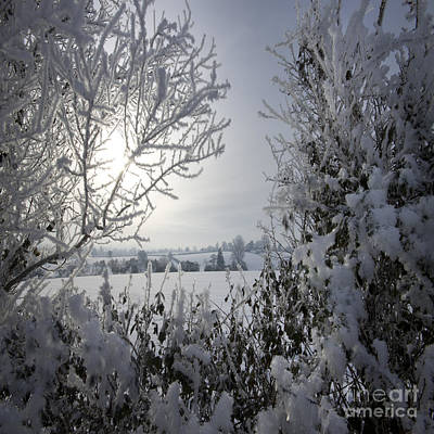 In The Winter Time Art Print