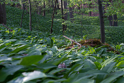 Photograph - In The Wood Of Wild Garlic by Andreas Levi