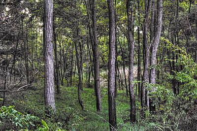 Photograph - In The Woods At Moraine Hills State Park by Roger Passman