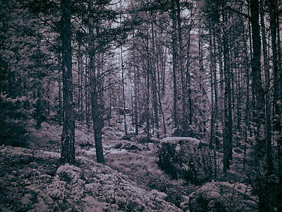 Photograph - In The Woods by Jouko Lehto
