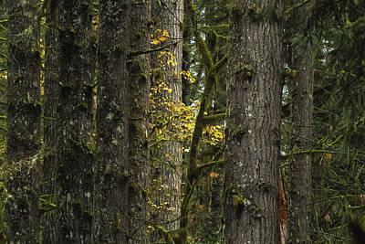 Vincent Van Gogh - In the Woods No. 2 by Belinda Greb