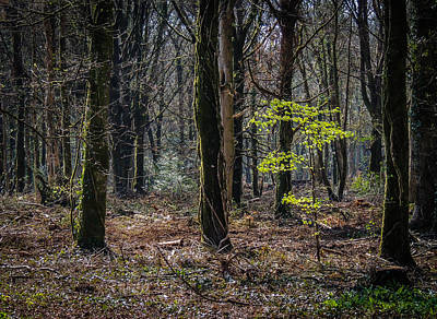 Photograph - In The Woods Of Ireland's Coole Park by James Truett
