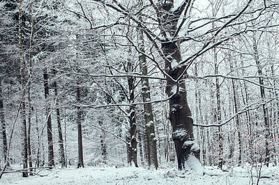 Photograph - In Winter Sleep by Jenny Rainbow
