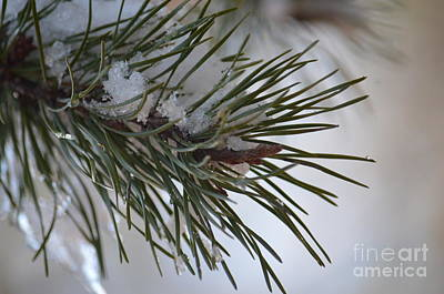 Photograph - In Winter's Light by Maria Urso